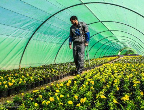 مزایای هوشمند سازی گلخانه ها