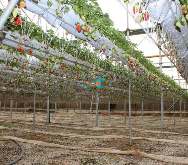 چگونگی کنترل دما و رطوبت گلخانه بصورت هوشمند