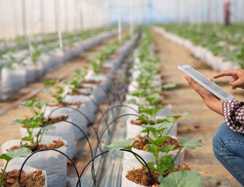 فایده هوشمند سازی گلخانه در چیست؟